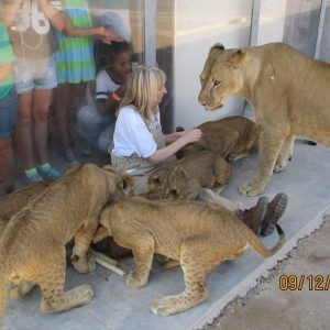 Get Close with the Lions!