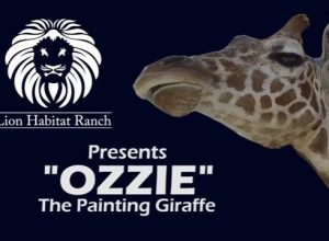 Ozzie the Painting Giraffe